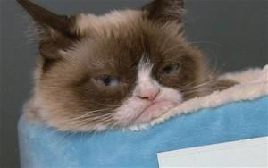 Grumpy_Cat_3000663b